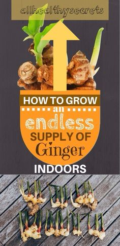 Ginger is extremely easy to grow indoors.