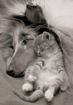 I LOVE to see cats and dogs cuddling - so heart warming!