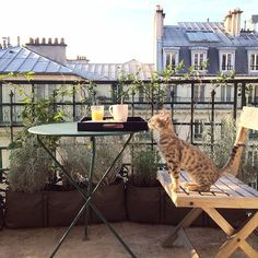 İf u live in apartment but no idea about your balcony this post for u,How to decorate balconies with style Paris Balcony, Apartment Balcony Garden, Apartment Balconies, Outdoor Spaces, Outdoor Living, Outdoor Decor, Veronica, Curiosity Killed The Cat, Concours Photo