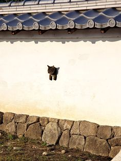 Cat in Japan - Inuyama castle I Love Cats, Crazy Cats, Cute Cats, Funny Animals, Cute Animals, Epic Drawings, Japanese Cat, Cat Wallpaper, Cat Boarding