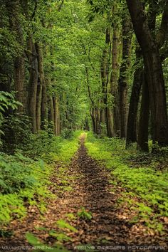 Gorgeous path in the woods