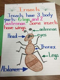 I love this anchor chart.I would use this in the classroom when teaching insects. I would have each student create one to keep for their science folder that they can look back at when needed. Preschool Themes, Preschool Lessons, Preschool Classroom, Kindergarten Worksheets, Classroom Activities, Preschool Crafts, Insect Crafts, Insect Art, Ant Crafts