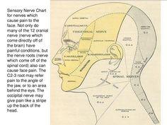 Facial pain due to TMJ, trigminal neuralgia, Sjogren syndrome, Eagles… Glossopharyngeal Neuralgia, Trigeminal Neuralgia, Neck And Shoulder Pain, Neck Pain, Health Heal, Oral Health, Sjorgens Syndrome, Sensory Nerves, Body Map