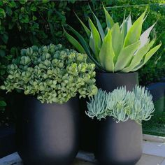 Backyard Garden Inspiration The Balcony Garden Diy Garden, Garden Care, Garden Projects, Garden Pots, Balcony Gardening, Potted Garden, Garden Spaces, Diy Projects, Pot Jardin