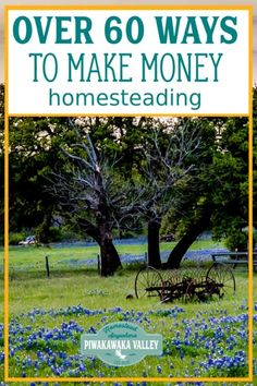 Making money from homesteading is a great way to become more self sustainable. Check out these unique ways to make money from your backyard and start a productive side hustle today that will earn you real money #piwakawakavalley
