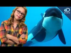 6 Videos SeaWorld Doesn't Want You to See  | One Green Planet