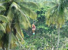 Canopy Adventure Zip Line Tours: Punta Cana, Dominican Republic