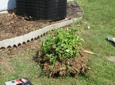 It's not as hard as you think to remove a shrub or bush from your yard.