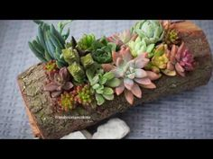 Como Plantar Suculentas En Troncos - YouTube Cactus Y Suculentas, Balcony Garden, Terrarium, Beautiful Flowers, Succulents, Plants, Ideas Decoración, Google, Youtube