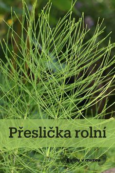 Herbs, Nature, Plants, Gardening, Food, Fitness, Naturaleza, Lawn And Garden, Essen