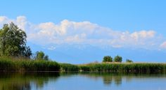 Micile oaze deltaice de pe Olt - Blog - Barcaholic.ro