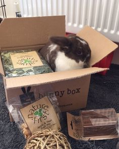 Best Unique Gifts And Gift Ideas For Rabbit Lovers And Bunny Owners Lop Bunnies, Dwarf Bunnies, Funny Bunnies, Baby Bunnies, Pet Bunny Rabbits, Buy A Bunny, Box Bunny, Cute Bunny, Rabbit Treats