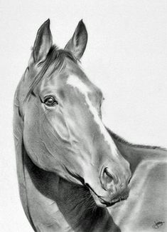 warmblood-wanderlust:      Horse by ~CubistPanther  This is a drawing. …A freaking drawing using only pencil and paper and I imagine a bit of eraser.