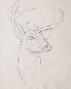 Animal Sketches Easy, Art Drawings Sketches Simple, Pencil Art Drawings, Easy Animal Drawings, Hipster Drawings, Drawing Ideas, Drawing Step, Drawings Of Love, Sketches Of Animals