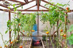 Vi hjälper dig att hitta och uppföra växthus; allt från de riktigt små modellerna till stora, vackra orangerier.