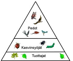 Ravintoketju Primary School, Fungi, Geography, Biology, Flora, Playing Cards, Environment, Science, Nature