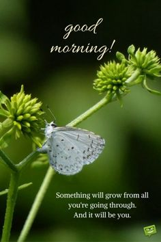 Looking for for ideas for good morning motivation?Browse around this website for perfect good morning motivation ideas. These enjoyable images will bring you joy. Good Morning For Him, Good Morning Handsome, Good Morning Funny, Good Morning Picture, Good Morning Sunshine, Good Morning Friends, Good Morning Messages, Morning Prayers, Morning Pictures