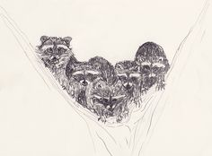 racoons in a tree, drawing