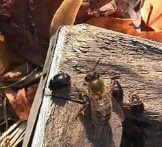 Thy Hand Hath Provided: Small Hive Beetles & A Homemade Trap