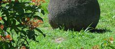 Santuarios Cacicales de las Esferas Diquís, 1º Sitio Cultural Patrimonio de la Humanidad en COSTA RICA
