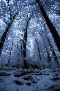 magicalnaturetour:    Winter forrest by chop1n on Flickr.