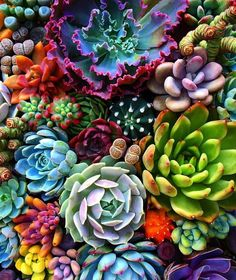 Organic Gardening Tips Colorful Succulents, Planting Succulents, Succulents Art, Succulents Drawing, Indoor Succulents, Propagating Succulents, Air Plants, Cactus Plants, Succulents Wallpaper