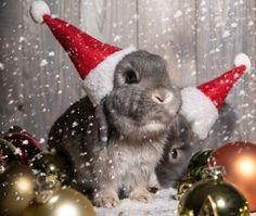 Merry Christmas - bunny, christmas, bunnies, magic christmas, merry christmas, xmas