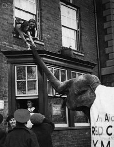 Elephant Collecting Charity Funds. Two young women lean from a window to make their donation to a collection for the Red Cross and the Y.M.C.A., in the Northamptonshire town of Towcester. England, 1940.