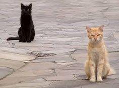 Ho vissuto con diversi maestri Zen – erano tutti dei gatti. (Eckhart Tolle)