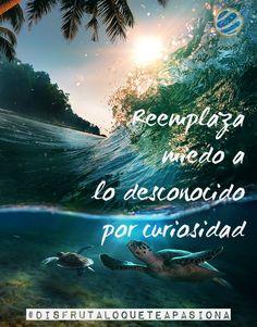Reemplaza miedo a lo desconocido por curiosidad #disfrutaloqueteapasiona   #mar…