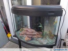 Aquarium monobloc panoramique - A vendre à Bruxelles