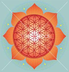 Sacred Geometry flower of life orange mandala vector image on VectorStock Flower Mandala, Mandala Art, Geometric Mandala, Sunflower Flower, Lotus Flower, Flower Of Life, Sacred Geometry, Geometry Art, Decoration