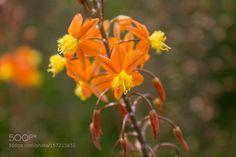 Orange Flower by PedroMatosPhotos. @go4fotos