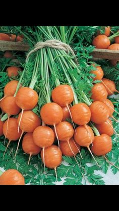 Parisian carrot. Grows well in clay and rocky soils.