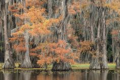 Fall on Caddo Lake