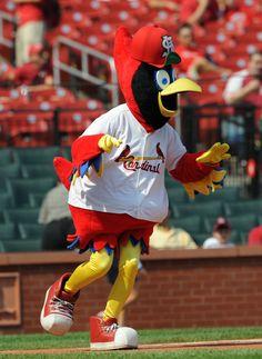 St. Louis Cardinals Mascot: Fredbird