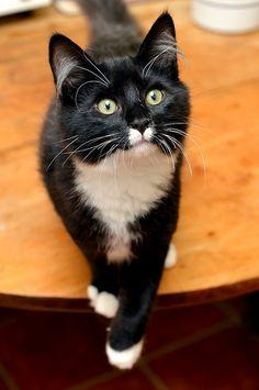 Still has kitten eyes!