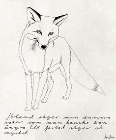 A fox by Tovelisa