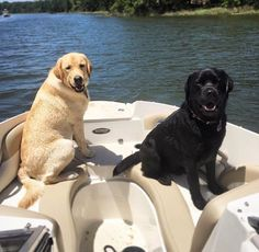 Just pose for the camera mate! Black Labrador, Labrador Dogs, Labrador Retrievers, Cute Puppies, Dogs And Puppies, Adorable Dogs, Dogs Of The World, Dog Quotes, Beautiful Dogs