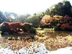 Important Cultural Property of Japan. Autumnal leaves of Kyoto Kajū-ji.