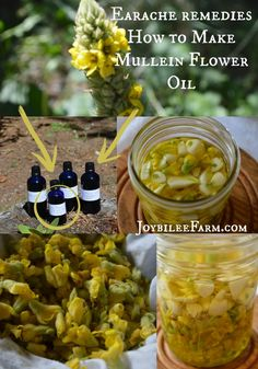 Earache remedies – How to Make Mullein Flower Oil with just 4 ingrients. Make it this morning and it will be ready at bedtime. -- Joybilee Farm