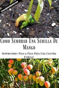 770 Ideas De Flores En 2021 Jardineria Y Plantas Jardinería En Macetas Cultivo De Plantas