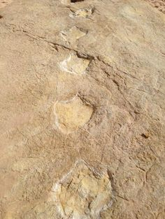 "Simon Cook on Twitter: ""Dinosaur footprint track at Salema, Portugal. #dinosaurs #fossils #geology"