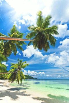 Tropical Beaches In California Beautiful Islands, Beautiful Beaches, Beautiful World, Places To Travel, Places To Go, Travel Destinations, Les Seychelles, Tropical Beaches, Island Beach