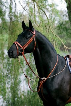 withabigblackhorseandacherrytree: equestrian-trends: Stubben Running Martingalewww.equestrian-trends.tumblr.com The colour looks great on a black horse!