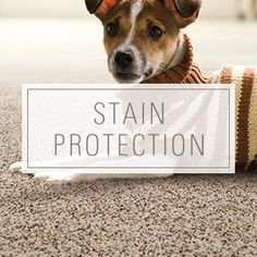 Karastan SmartStrand Forever Clean Stain Protection available at Flooring Innovations