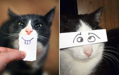Cats With Cartoon Mouths And Eyes - http://brosive.com/cats-cartoon-mouths-eyes/