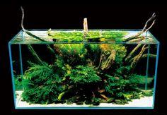 Takashi Amano | Nature Aquarium Aquascape