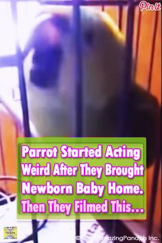 Parrot picks up a new trick after parents bring their newborn baby home. Funny Pics, Funny Stuff, Funny Pictures, Hilarious, Animals And Pets, Baby Animals, Cute Animals, Animal Video Youtube, Great Videos