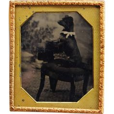 Antique Tintype Photograph ~ Sweet Begging Dog With Bow